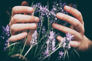 Lavender Essential oil for August